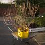 My new plant (Hydrangea)