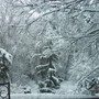 Winter in my yard