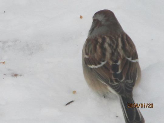 Sparrow!