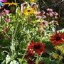 Achillea, Echinacea, Rudbeckia & Monarda