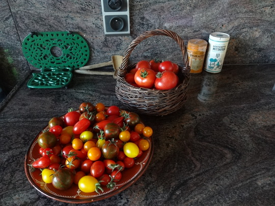 Green tiger, Sungold, Datterino, Sugardrop and Ailsa Craig tomatoes