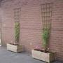 Planters 1