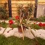 Very nice plant (Epiphyllum Ackermannii)