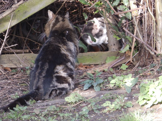 Stand off at the garden fence!!