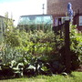 My new veg patch