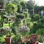 Up the garden