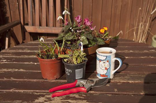 The gardening season 2014