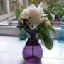 Three Flower competion.   Daphne Odora Sakkiwaka - Rhodo Ptarmigan - and a white Camellia