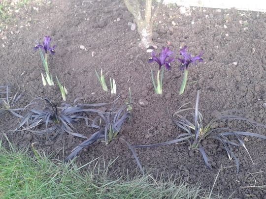 Iris George and black grasses