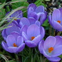 Crocus - Remembrance (Crocus)