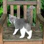 'I'm a boy cat!'