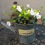 Little white periwinkle in a watering can. Treat myself!