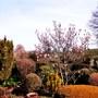 Spring_garden_2014_023