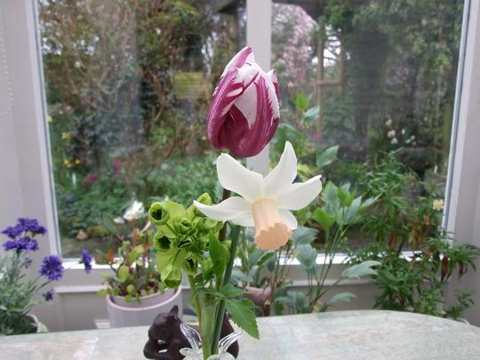 Three Flowers.  N.Cotinga - T. Rems favourite - Mathiasella bupleuroides Green Dream