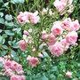 Rosa_the_fairy_