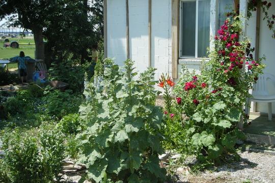 garden left