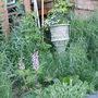 house garden side