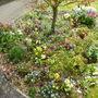 Front_garden_april_2014_003