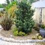 Entrance garden 1