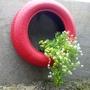 Plants in tyres 1