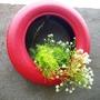 Plants in tyres 2