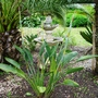 Sterlitzia among palm trees