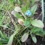 Blue_tiny_140401_3_