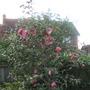 front garden 2014 010