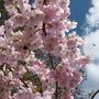 Spring_flowers_april_2014_001