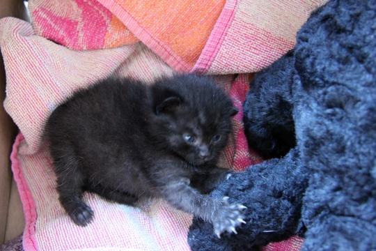 Kitten Progress
