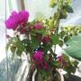 Greenhouse_005