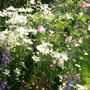 Summer_garden_2008_finn_and_popps_018