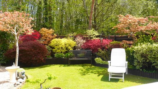 Garden starting to unfold