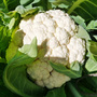 Cauliflower_2014