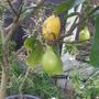 Greenhouse_016