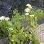 Greenhouse_012