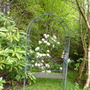 Seat and Rhododendrons