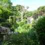 Jungle garden 2