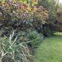 Spring border (Geranium himalayense (Hardy geranium))