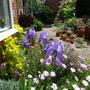 Front Garden 17.05.14