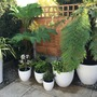 Potted shady garden