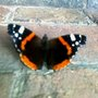 Red Admiral Butterfly - First one this season hopefully lots more to come