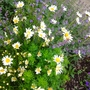 Spring Garden in the rain