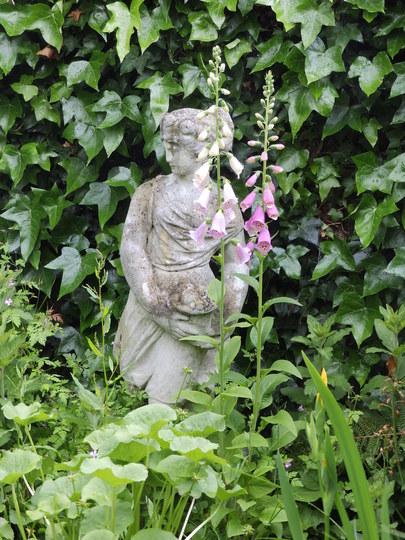 Flora and Foxglove