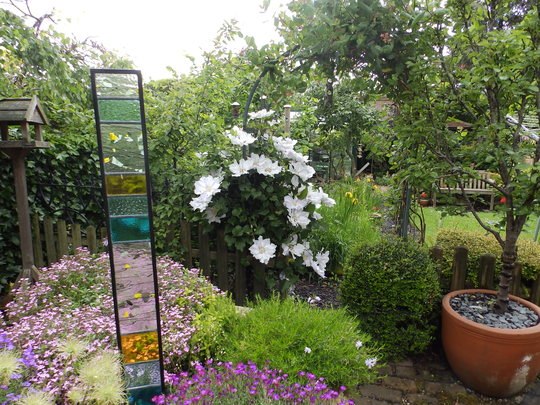 Alpines and Clematis