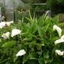 A walk my Garden 27th May 2014 039