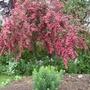 Garden 27th May 2014 045
