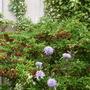 Garden 27th May 2014 056