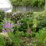 Garden 27th May 2014 029