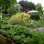 Garden 27th May 2014 018